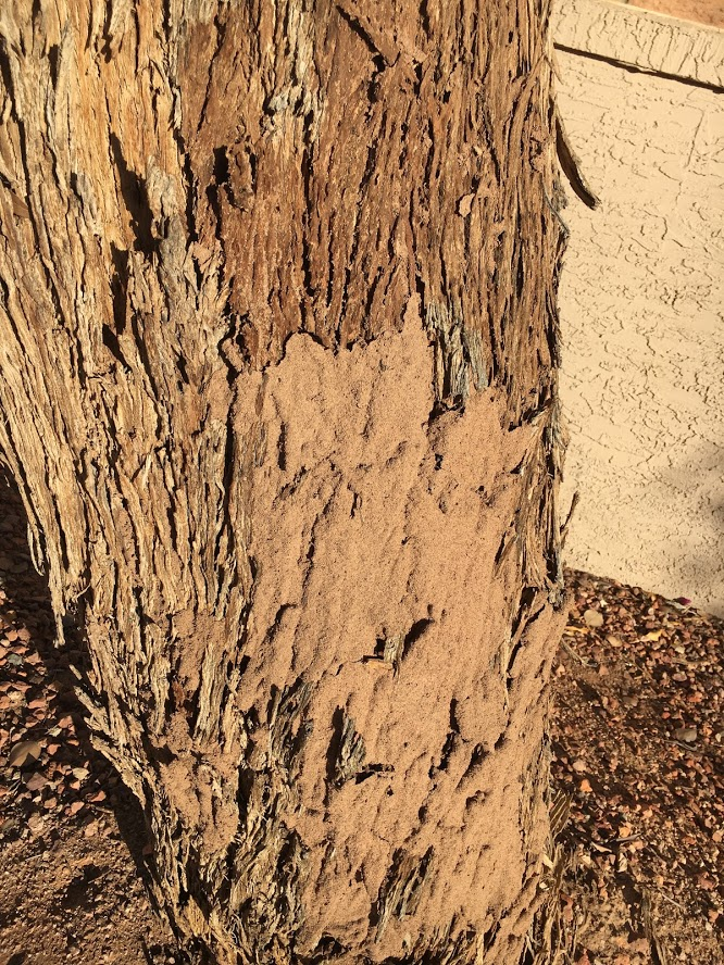 termites on the side of a tree